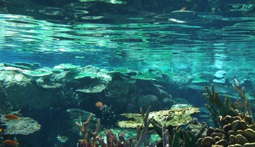碧南海浜水族館の入館料金とアクセス方法【お得なチケット割引!?駐車場は!?】