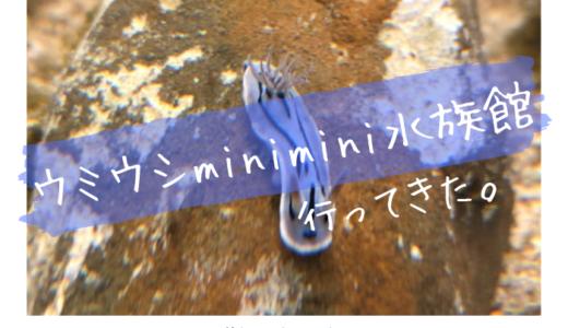 ウミウシminimini水族館に行ってきました【天保山】