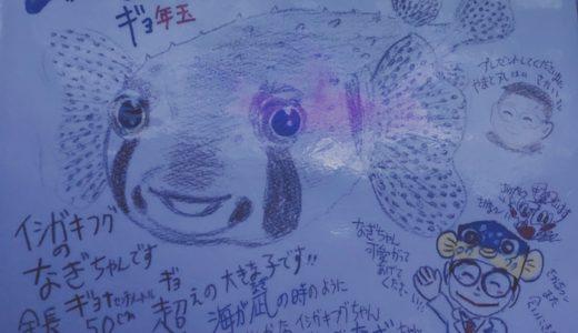 【雑談】水族館を好きになった話