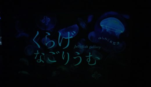 名古屋港水族館のクラゲに癒された【くらげなごりうむ】