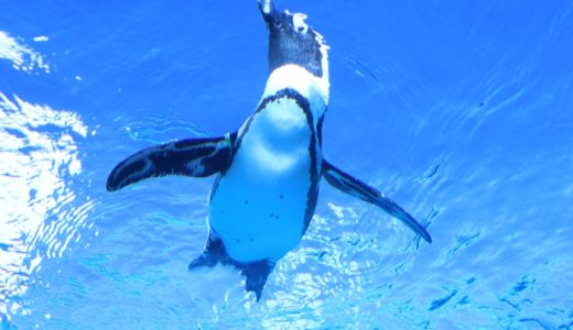【関東】ペンギンに会える水族館【8選】