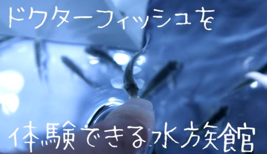 ドクターフィッシュを体験できる水族館【関東で体験できる場所もある?】