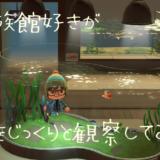 【あつ森】水族館好きが魚をじっくりと観察してみた