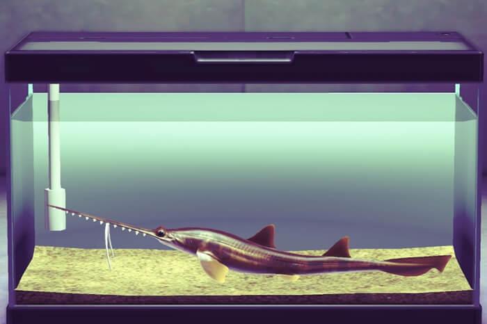 ノコギリザメ【あつ森】