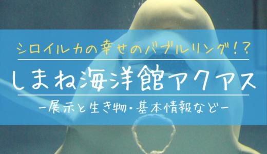 西日本で唯一シロイルカがいる水族館!しまね海洋館アクアスの見どころを徹底解説