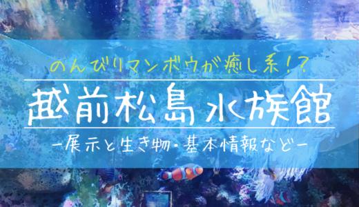 のんびりマンボウが癒し系!?越前松島水族館の見どころを徹底解説
