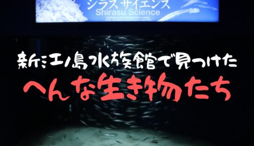【新江ノ島水族館】えのすいで見つけたへんな生き物たち