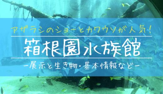 アザラシのショーとカワウソが人気!箱根園水族館の見どころを徹底解説