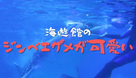 海遊館のジンベエザメが可愛い
