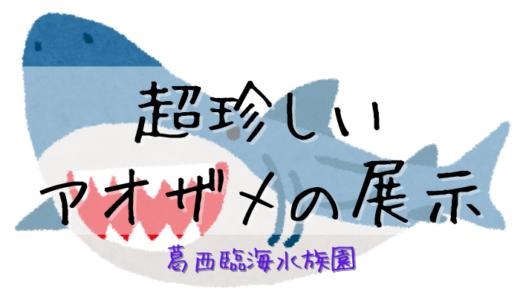 【葛西臨海水族園】超珍しいアオザメの展示【たった1日】