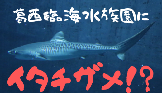 水族館でイタチザメが見られる!?【葛西臨海水族園】