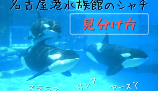 【見分け方】名古屋港水族館のシャチを紹介【名前】