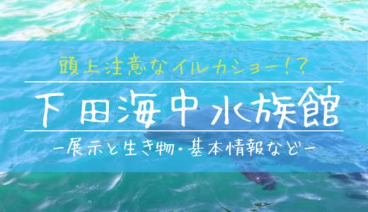 頭上注意なイルカショーが見どころ!?下田海中水族館を徹底解説