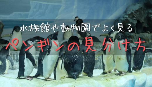 水族館や動物園でよく見るペンギンの見分け方