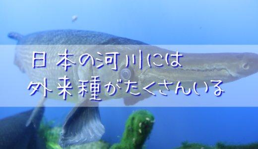 日本の河川には外来種がたくさんいる
