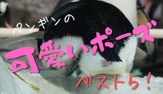 個人的なペンギンの可愛いポーズ【ベスト5】