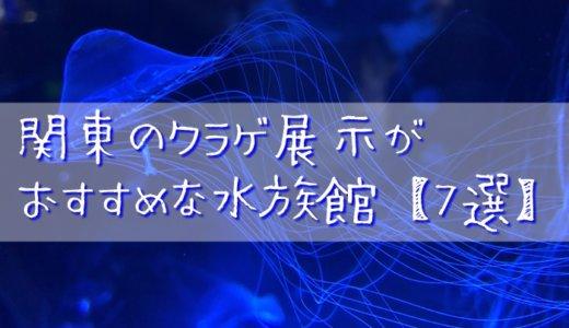 関東のクラゲ展示がおすすめな水族館【7選】