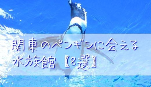 関東のペンギンに会える水族館【8選】