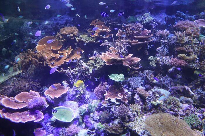 名古屋港水族館の水槽(正面)