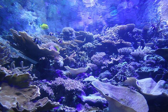 名古屋港水族館の水槽(下から)