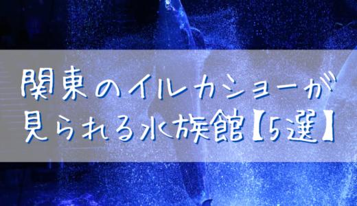 関東のイルカショーが見られる水族館【5選】
