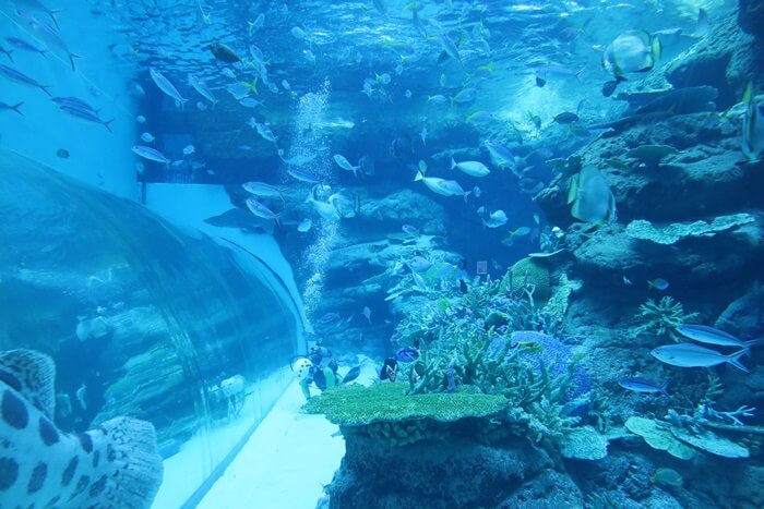 サンゴ礁大水槽