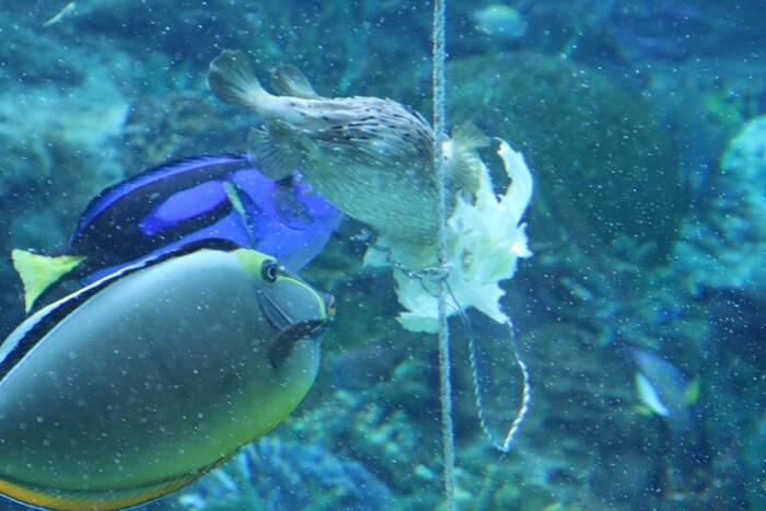 エサを食べる魚たち